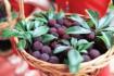 常见的水果有哪些冷知识?
